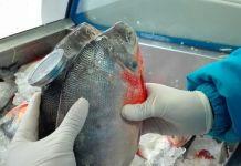 Pescado fresco - Formula Medica
