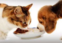Golosinas para mascotas - Formula Medica