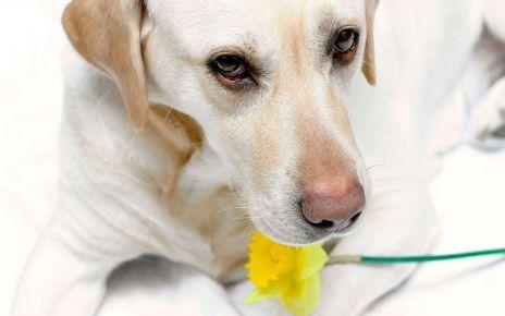 Alergias y mascotas - Formula Medica