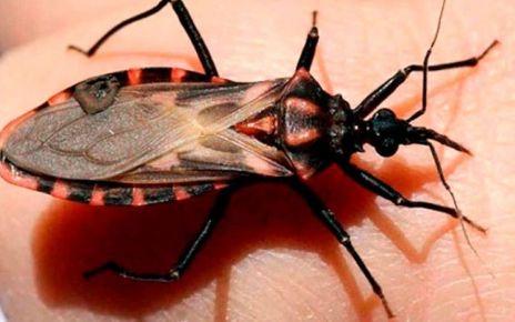 Enfermedad de Chagas - Formula Medica