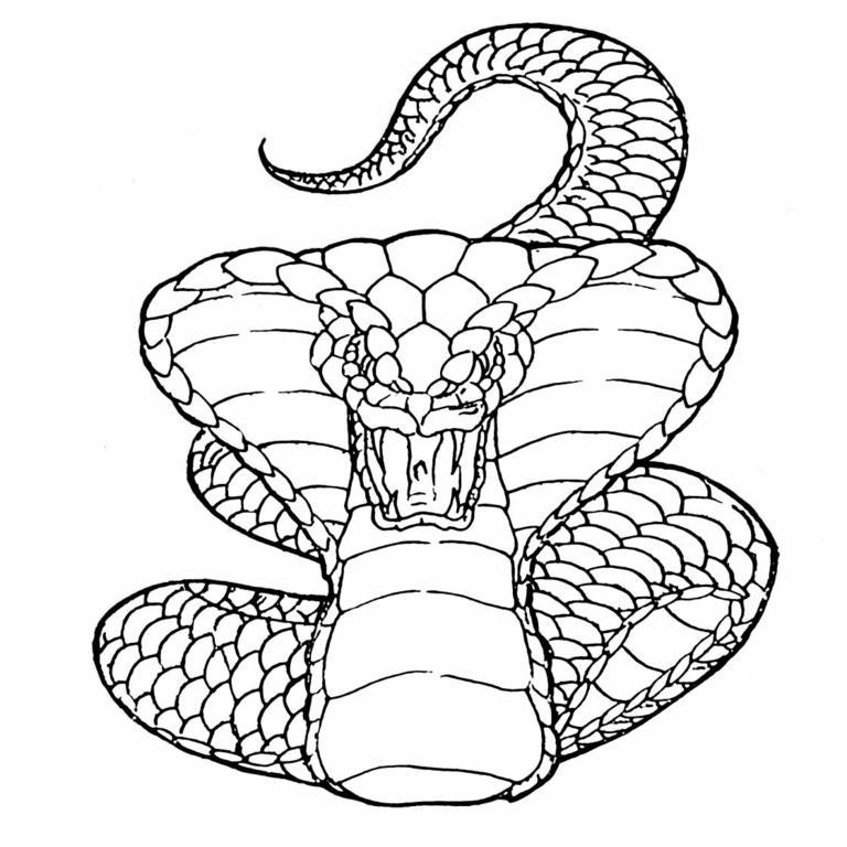 Alguien tendra un tutorial de como modelar una cobra