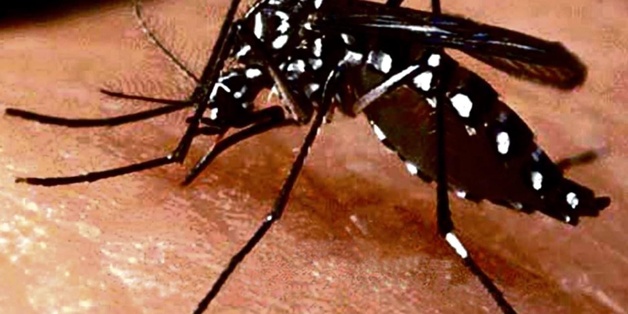 SS pide a médicos notificar casos de Dengue, Zika y Chikungunya