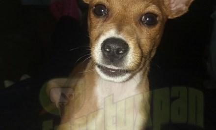 Campaña de Esterilización de Perros y Gatos este 28 de octubre