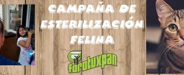 Esterilización de Felinos del 7 al 14 de Noviembre en Tuxpan