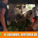 El Zacahuil: Historia de la Huasteca