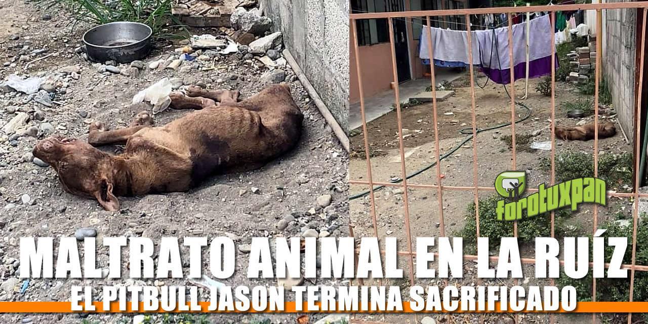 Muere «JASON» por Maltrato Animal