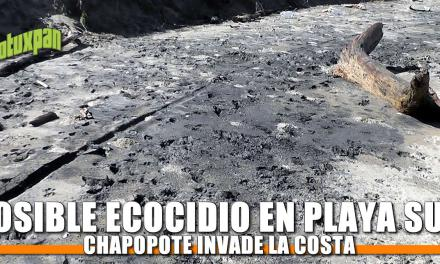 Posible ECOCIDIO en Playa Sur
