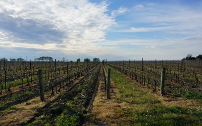 Niagara on the Lake – Random Vineyard