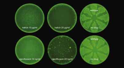 Antibiotikum Halicin