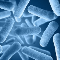 bacteria background render