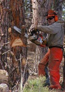 220px-Chainsaw_cutting_tree