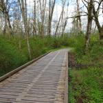 A bridge along the trails on Brae Island