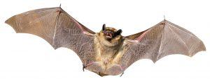 Stock image bat