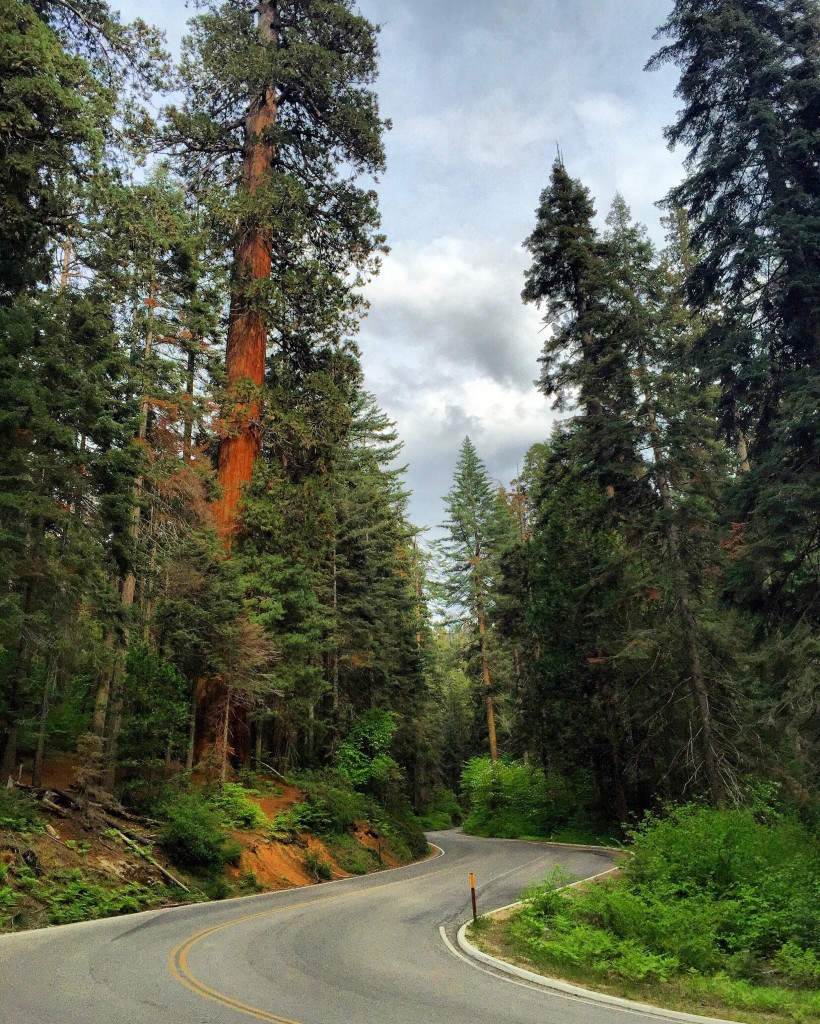 sequoianationalpark-road-forteebello