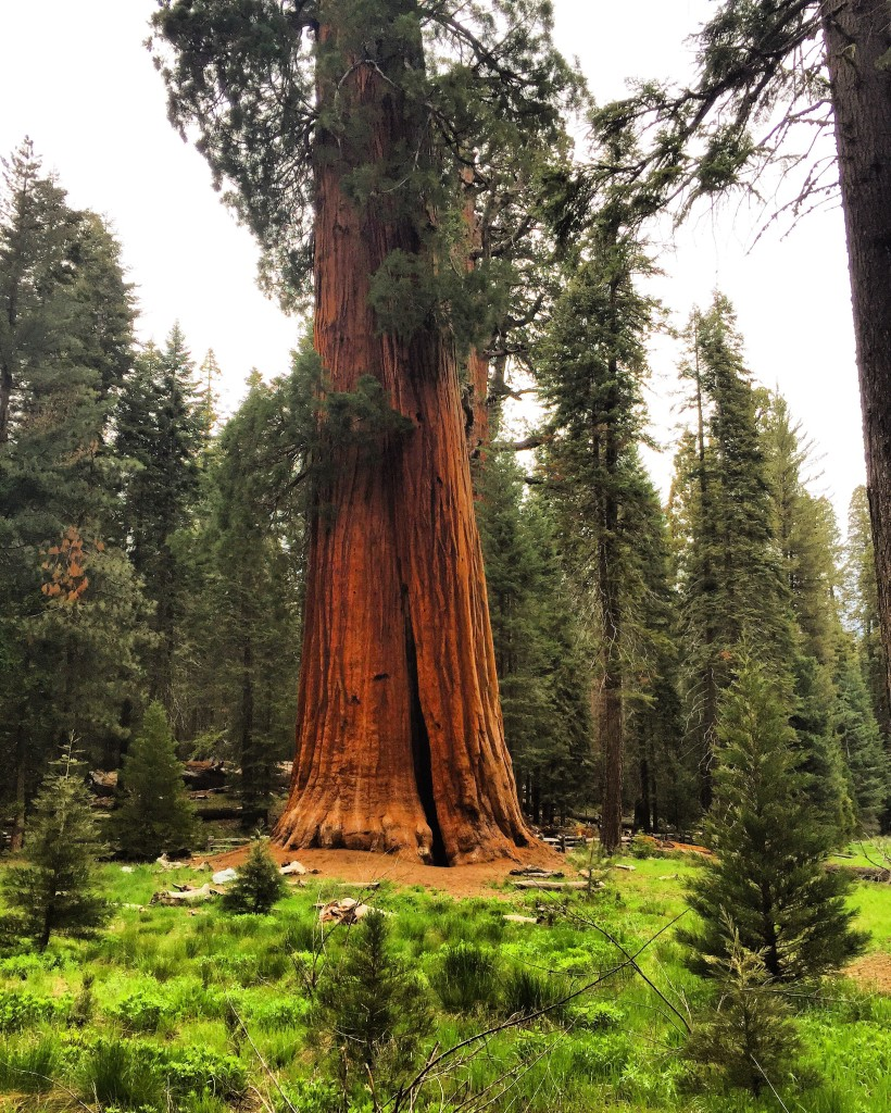 sequoianationalpark-tree-forteebello