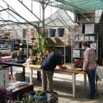 Tuincentrum Disveld (4)