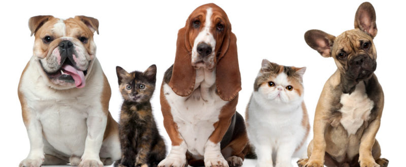 Dog & Cat Disease Definitions