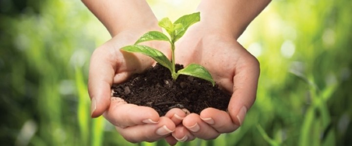 Fertile Soil: Will We Grow & How?