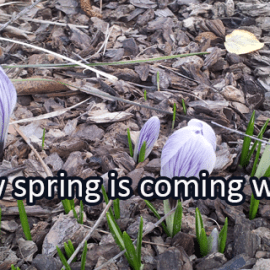 Writing Prompt for March 13: Spring on the Way