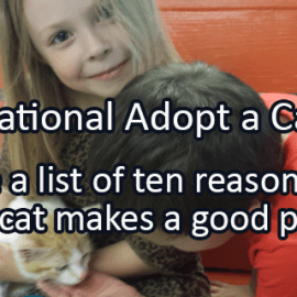 Writing Prompt for June 9: Adopt a Cat