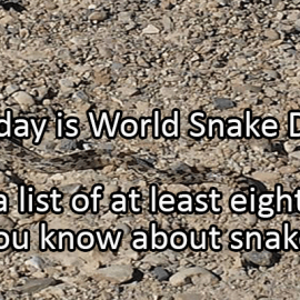 Writing Prompt for July 16: Snakes