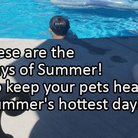 Writing Prompt for August 11: Dog Days of Summer