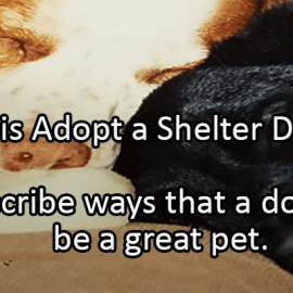 Writing Prompt for October 2: Shelter Dogs