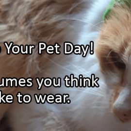 Writing Prompt for January 14: Pet Dress Up