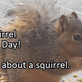 Writing Prompt for January 21: Squirrels