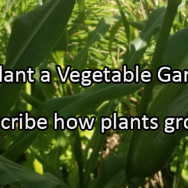 Writing Prompt for May 19: Vegetable Garden Day