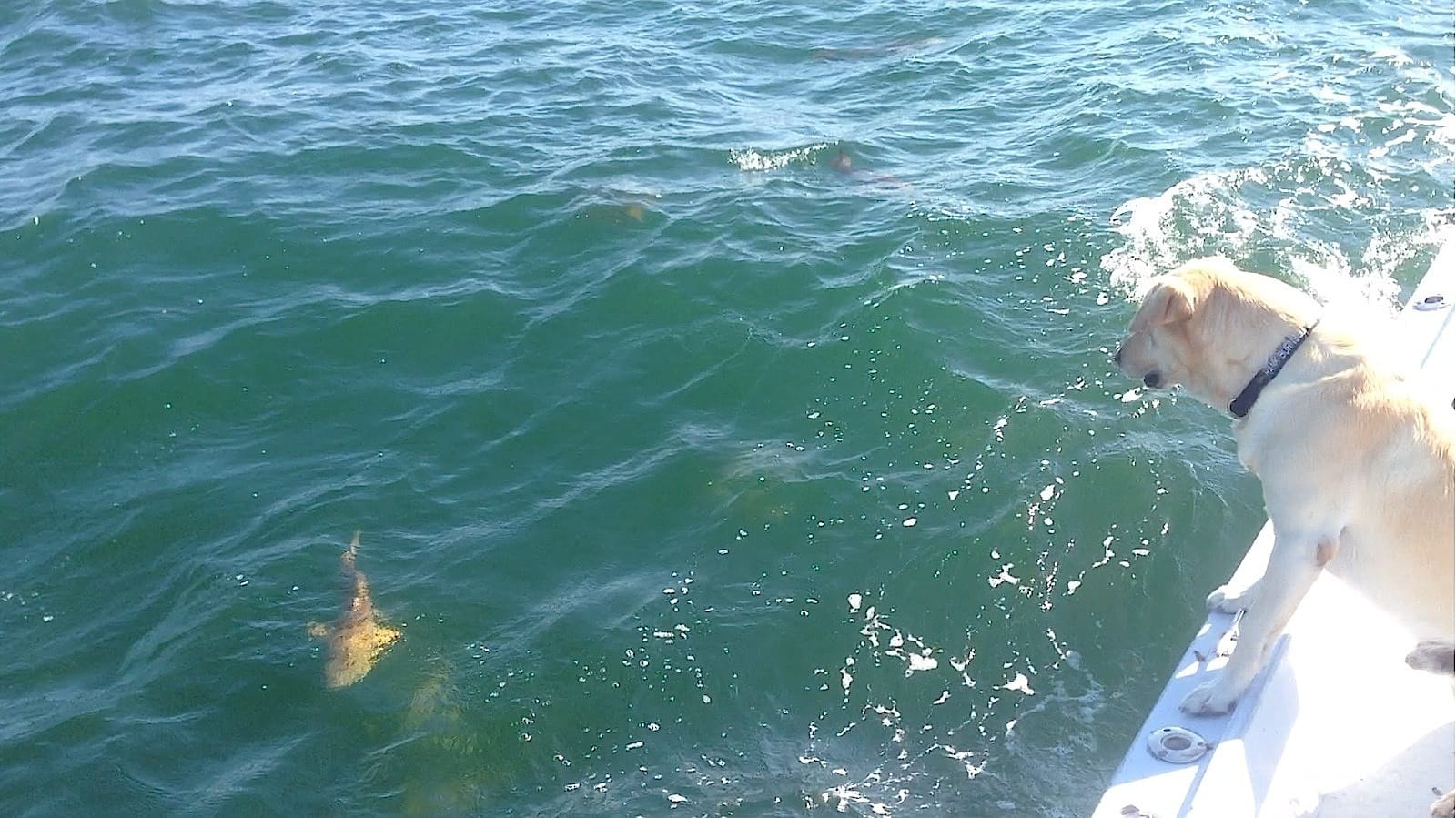 Fort myers fishing report 2 14 13 small shark redfish for Fort myers fishing