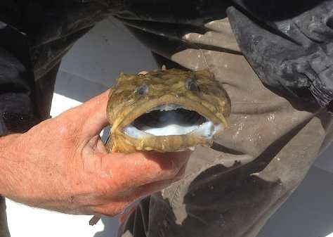 Dogfish 1, March 31, Sanibel, Captiva & Fort Myers Fishing Report and Charter & Guide Service.