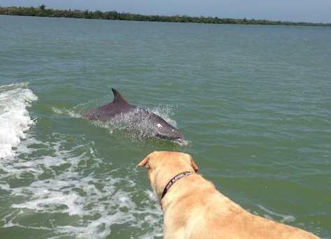 Dolphin & Hank, April 14, Buck Key, Fort Myers Fishing Charters & Fort Myers Fishing Report.