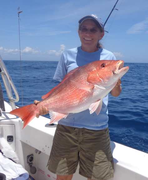 Fort Myers Fishing Report, Red Snapper Fishing, Catch & Release, Courtesy Of Florida Sea Grant, Thursday, April 14, 2016 ~ #FortMyers.