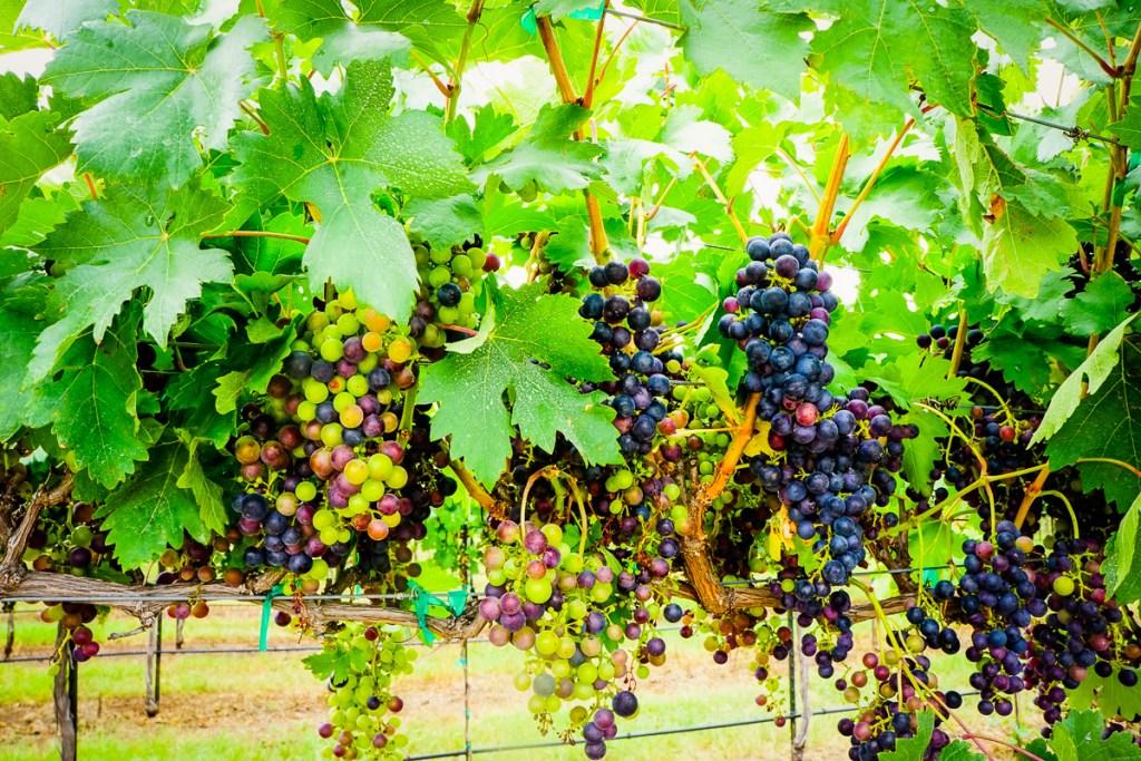 Must-Visit Wineries in Fredericksburg