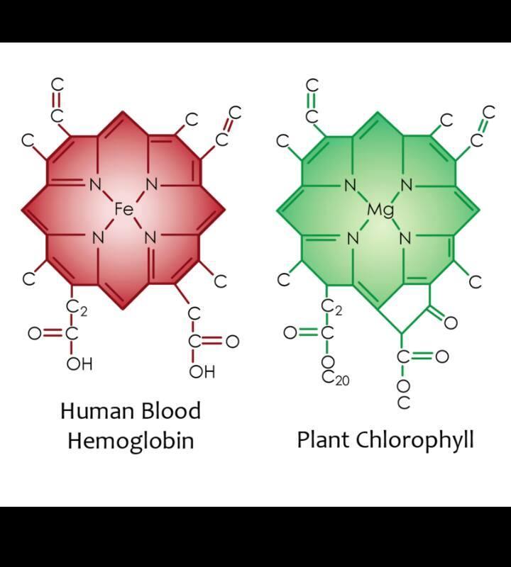 l'essere umano come le piante
