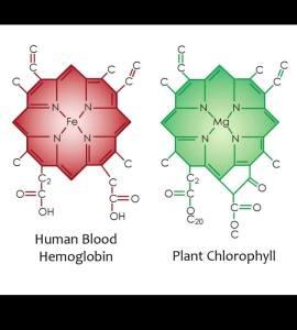 Emoglobina e Clorofilla
