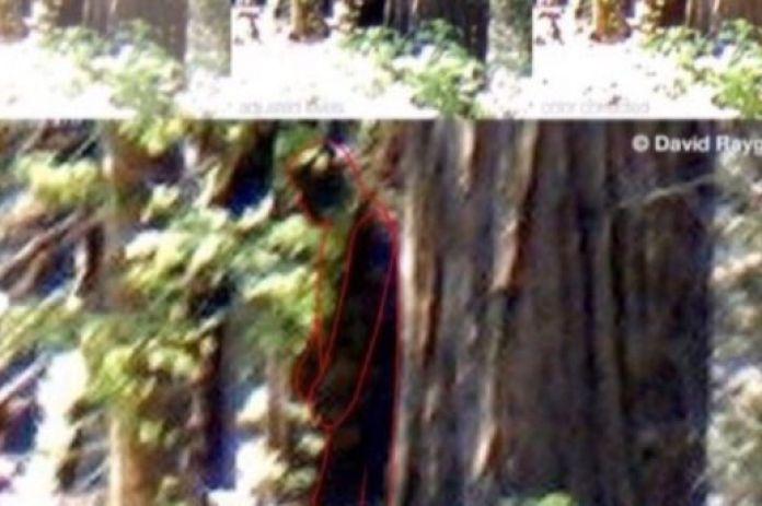 Фермер из Калифорнии утверждает, что видел снежного человека
