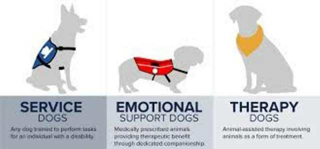 قوانین مسکن برای افراد معلول و حیوانات کمک کننده ...