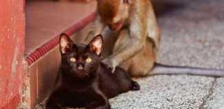 amazing_event_pictures_massage-cat.jpg