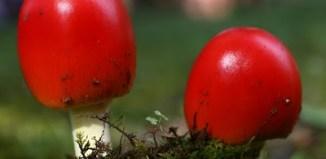 colored_mushrooms_1.jpg