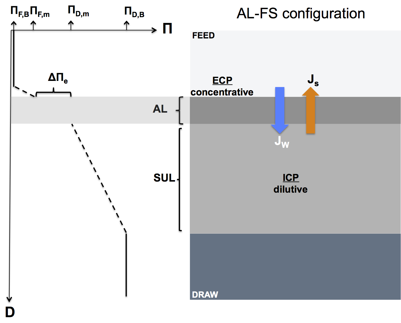 hight resolution of schematic diagram illustrating concentration polarization in a forward osmosis membrane