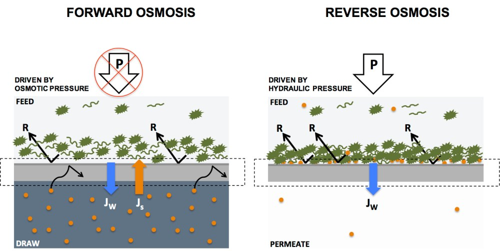 medium resolution of water filtration by forward and reverse osmosis explained in 4 paragraphs