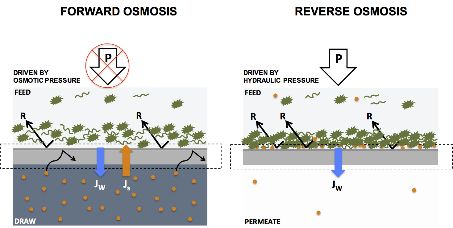 hight resolution of water filtration by forward and reverse osmosis explained in 4 paragraphs