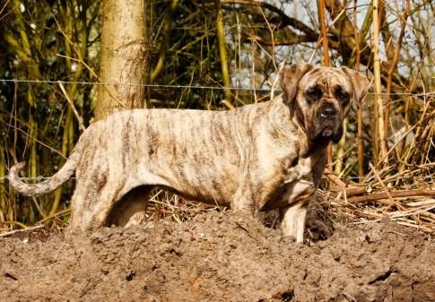 SOVA-training met behulp van een hond