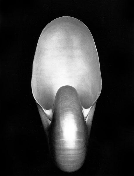 Edward Weston, Nautilus (1927)