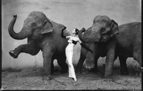 Richard Avedon, fotografias mais caras do mundo