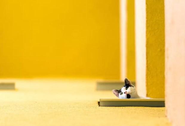 fotografia-minimalista_MARIAN-Gabriel-Constantin