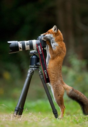 Tudo pronto, pode começar que vou fotografar tudo!