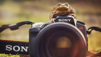Até os sapos gostam de fotografia!